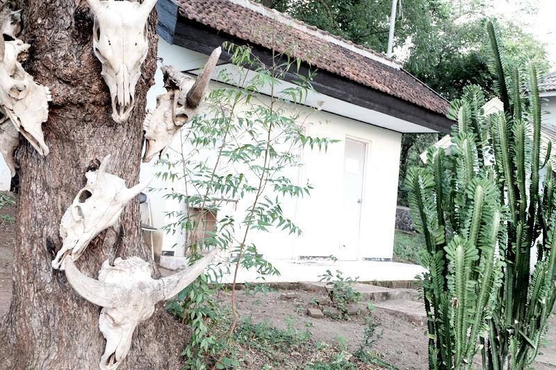 baluran national park 3