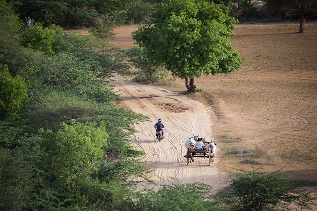 The Ox Cart - Bagan - Myanmar