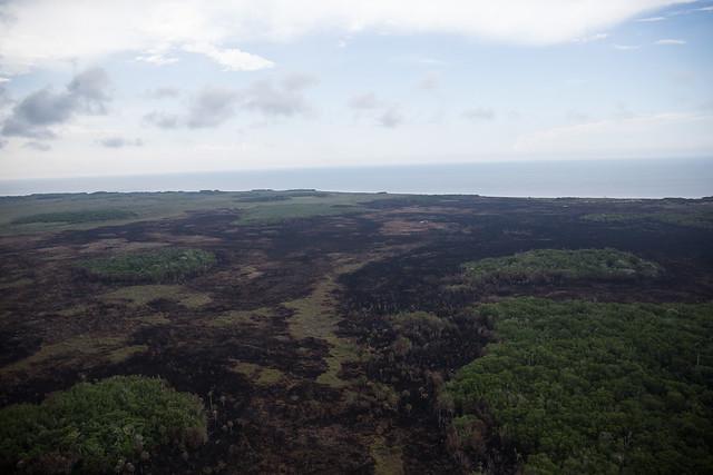 Incendio forestal consume 500 hectáreas de la Reserva de Dzilam de Bravo