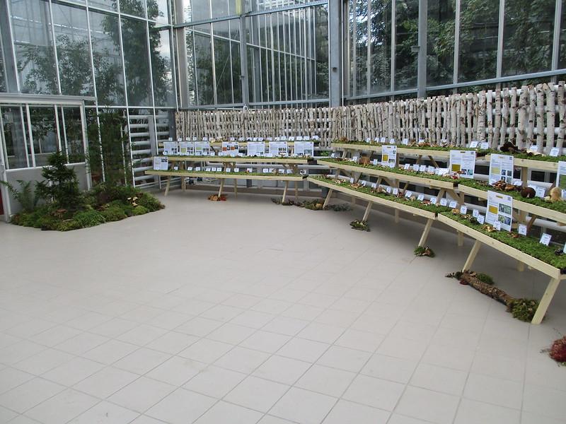 Expozitie Ciuperci Gradina Botanica 2016