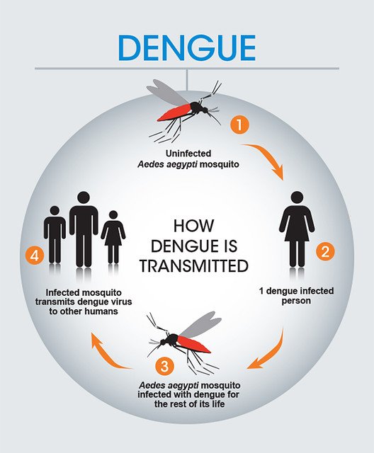 How dengue is transmitted