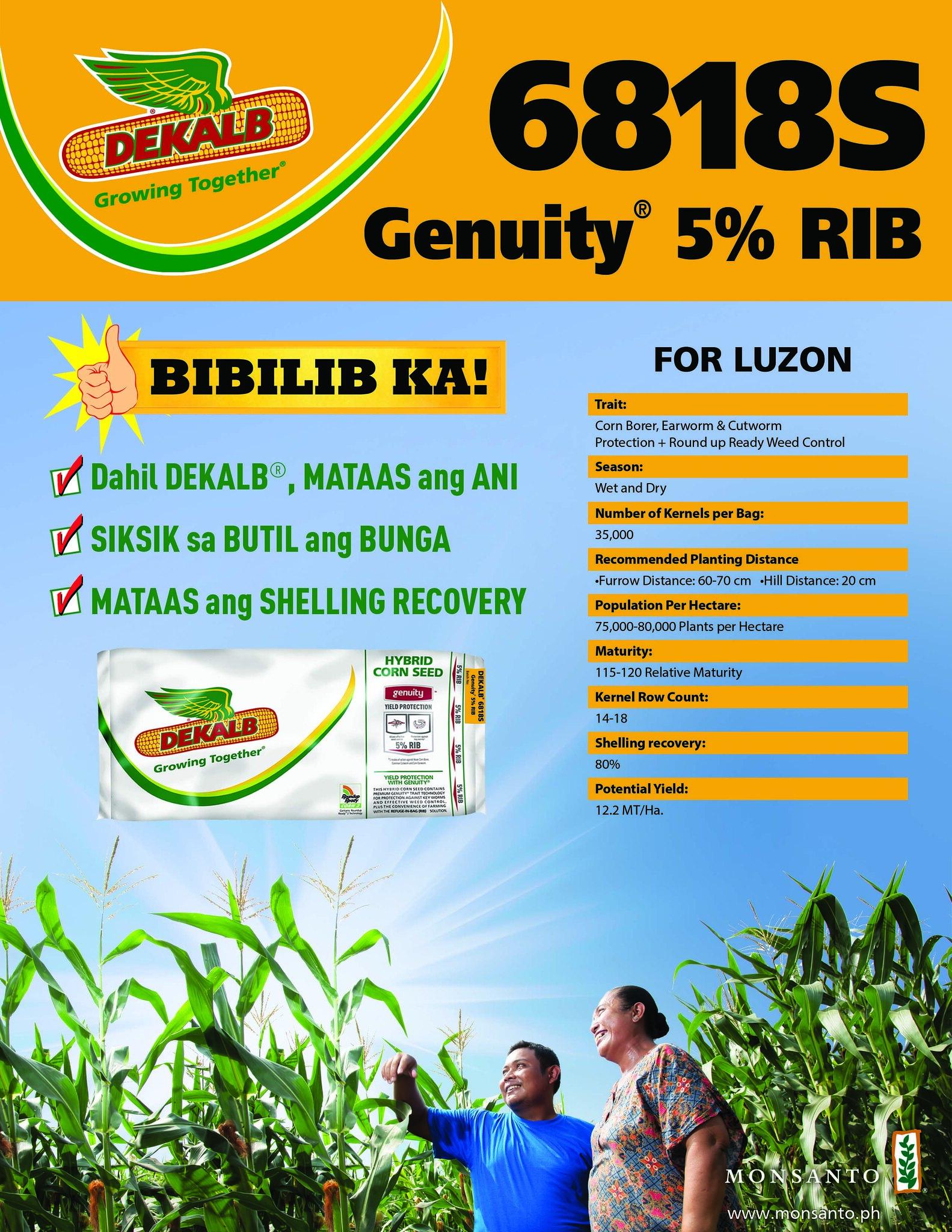 DEKALB 6818S for Luzon