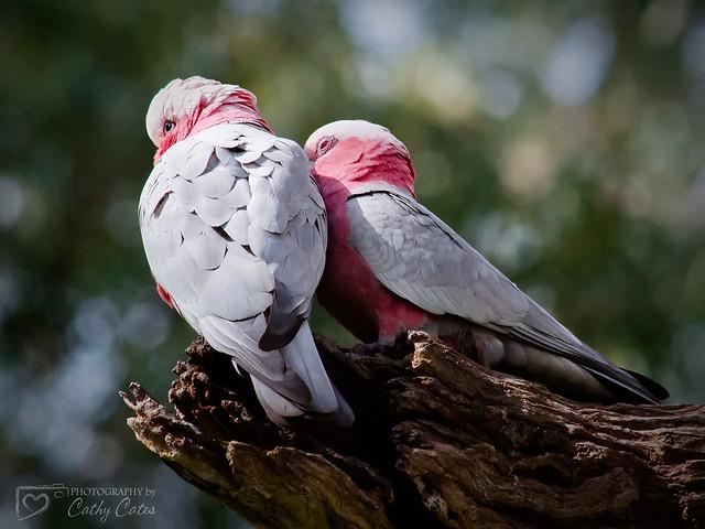 Looks Like Love!
