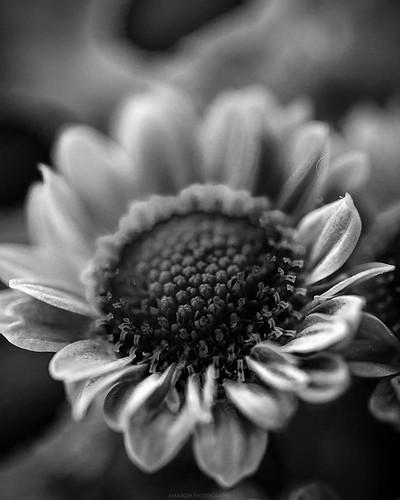 Tony flower