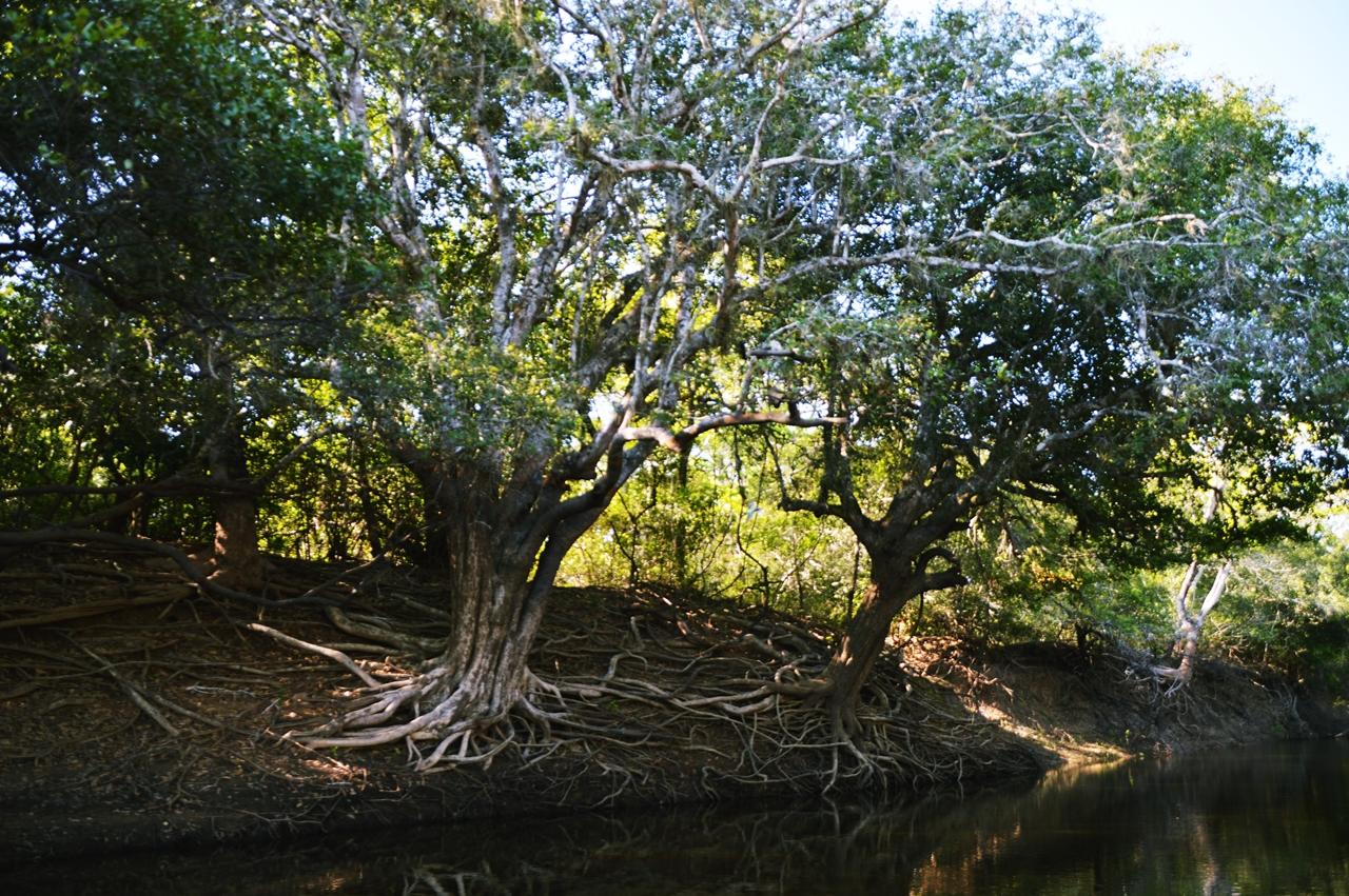 pantanal34
