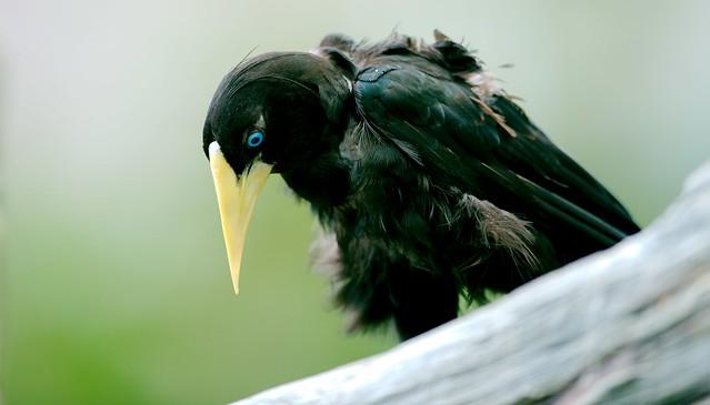 Bird_27
