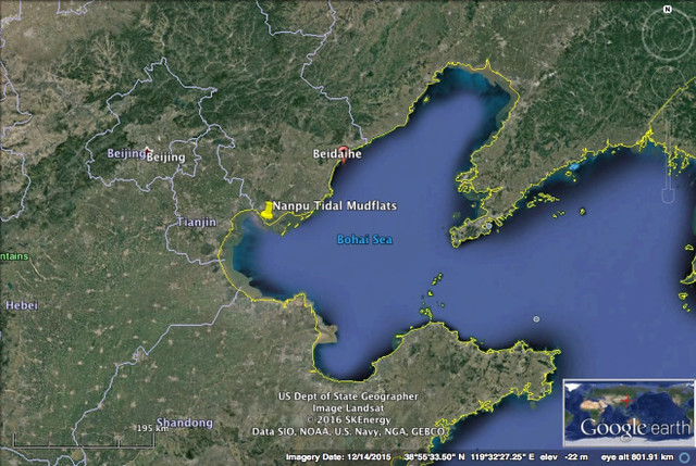 The Yellow Sea: The Highest Conservation Priority In East ...