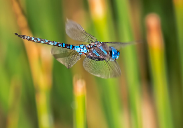 Dragon-Fly-4-7D2-280716