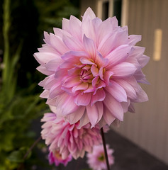 Vera's Flowers - Garden Bay