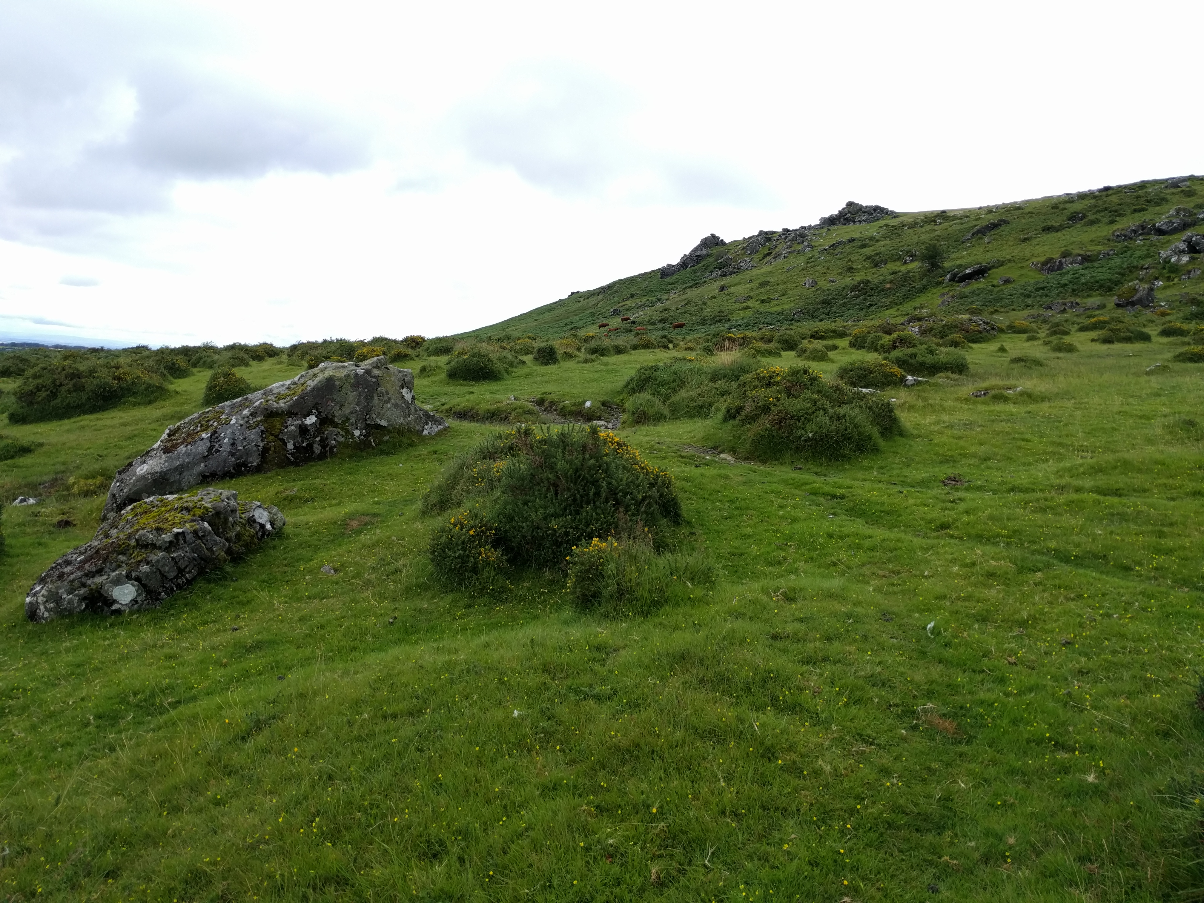 East Tor, part of Sourton Tors #dartmoor #sh