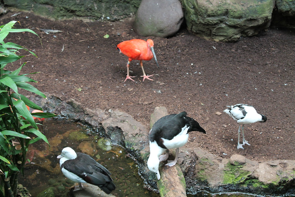 Central Park Zoo (41)