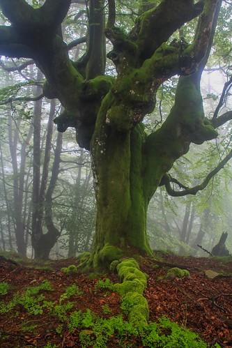 Parque Natural de #Gorbeia #DePaseoConLarri #Flickr - -856