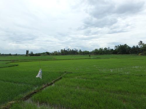 farms-3