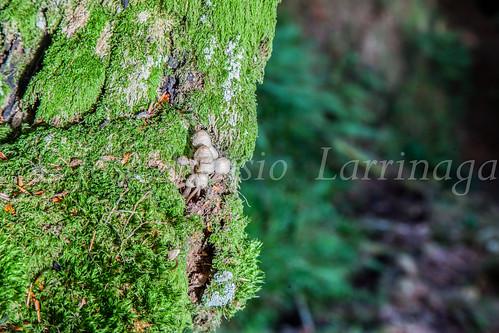 Parque Natural de #Gorbeia #DePaseoConLarri #Flickr      -1369