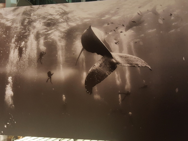 World Press Photo 2016 humpback whale