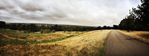 View from the ridge - Richmond Park