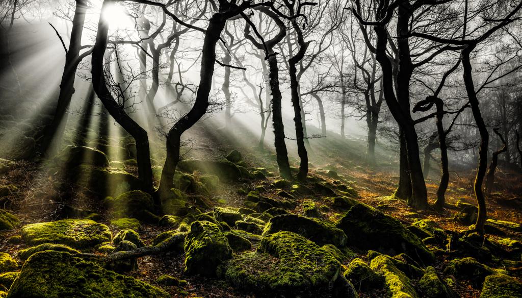 PA20 juanperezgargallo (España) - Niebla en el bosque del Betato - Tomada en Tramacasilla de Tena el 17720162016