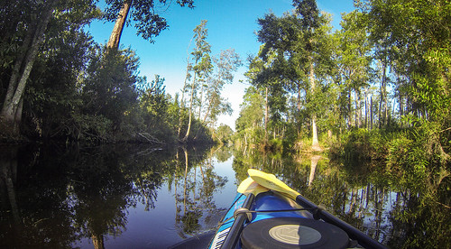 Lowcountry Unfiltered at Okefenokee-26