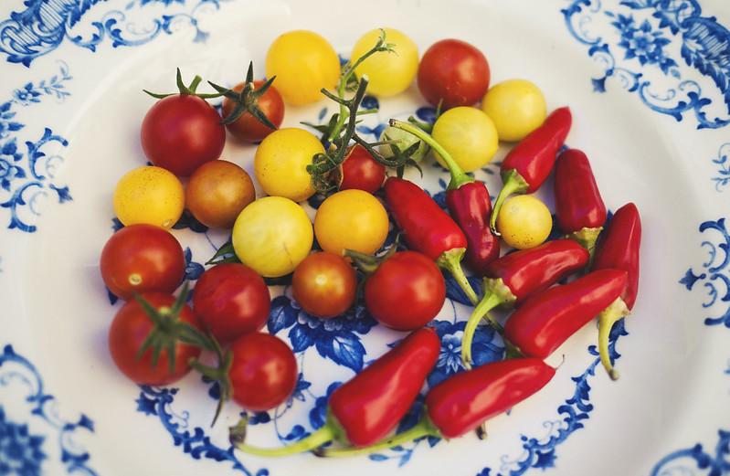 tomater & chili