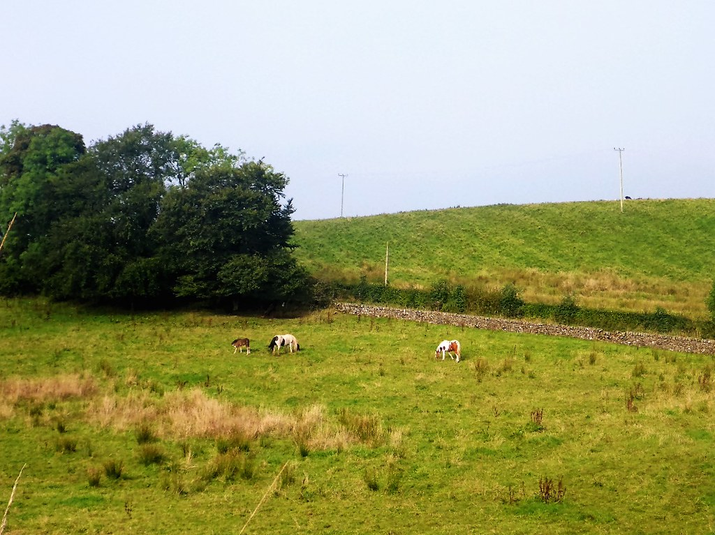 Rural Scene, Ayrshire, Scotland.