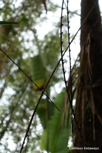 forest-mindanao.jpg