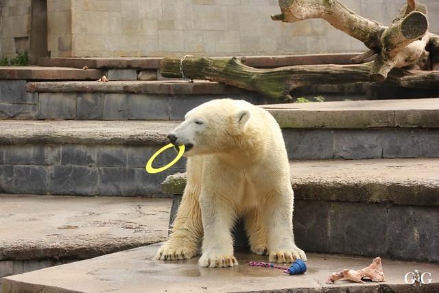 Zoo Rostock 1.Teil 20.08.201642