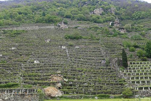 Donnas Wine Farm