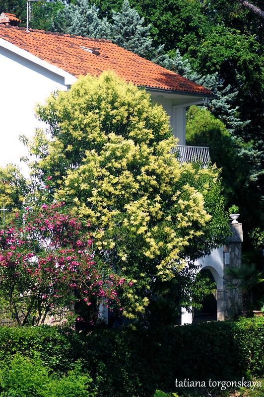 Цветущие деревья в черногорском саду