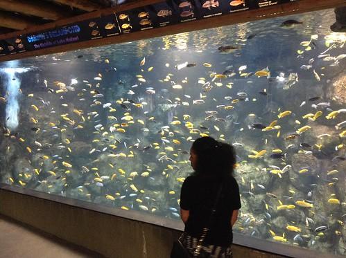 Fish Tank, Toronto Zoo