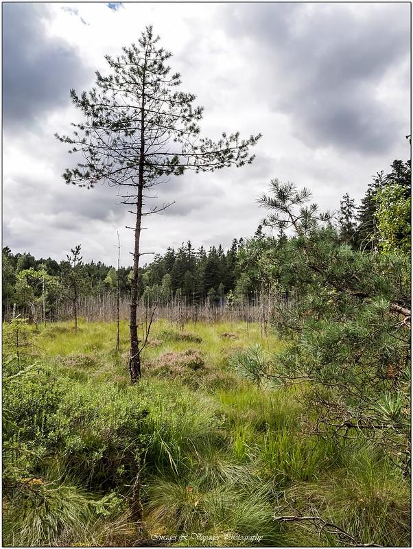Promenons nous dans les bois ... + Ajouts ... 29155774005_e08dfeb26d_c