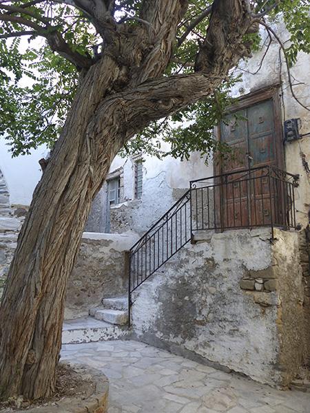 un arbre devant l'escalier