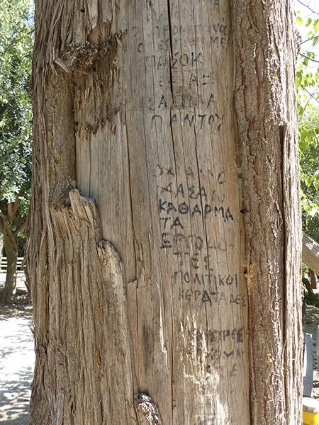 arbre signé