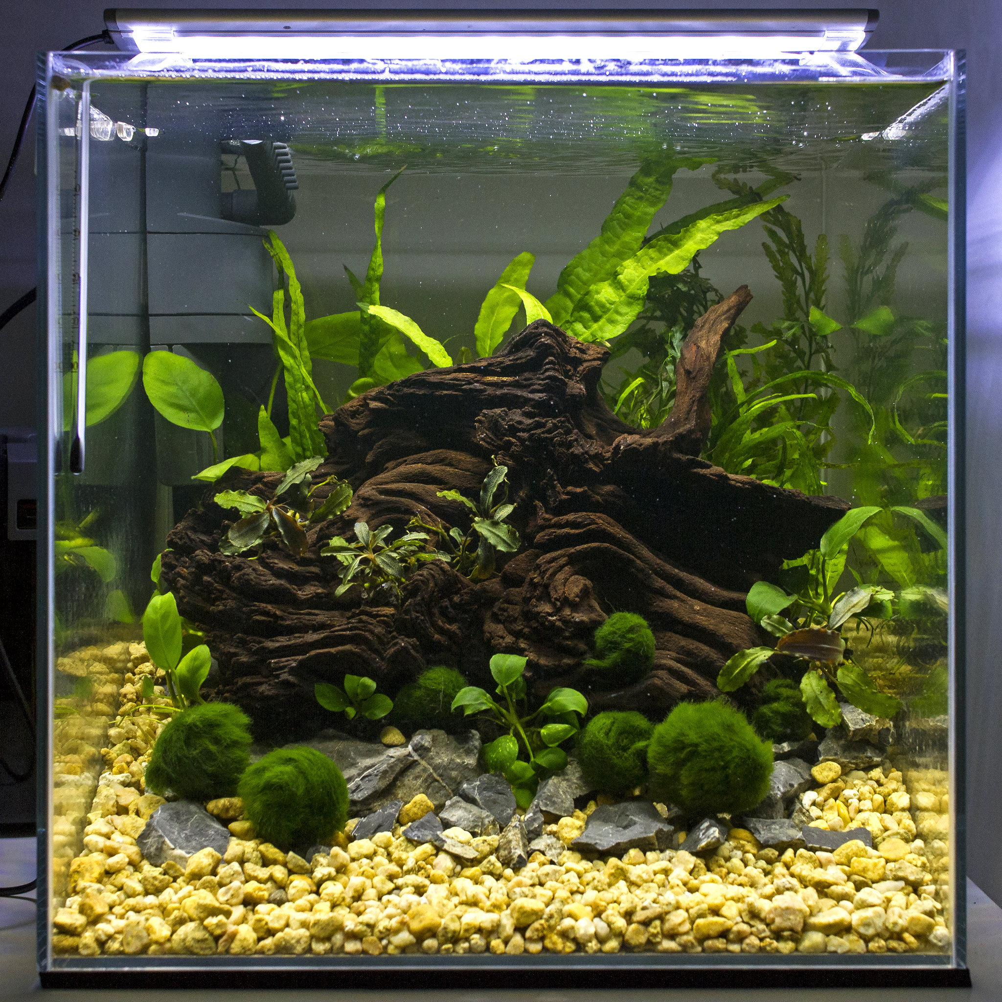 Marvelous Low Tech 30cm Cube Aquascape By Colm Doyle, On Flickr