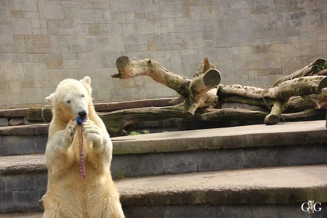 Zoo Rostock 1.Teil 20.08.201639