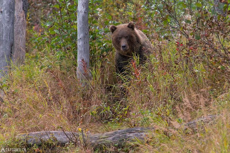 Watching - Lake Clark National Park