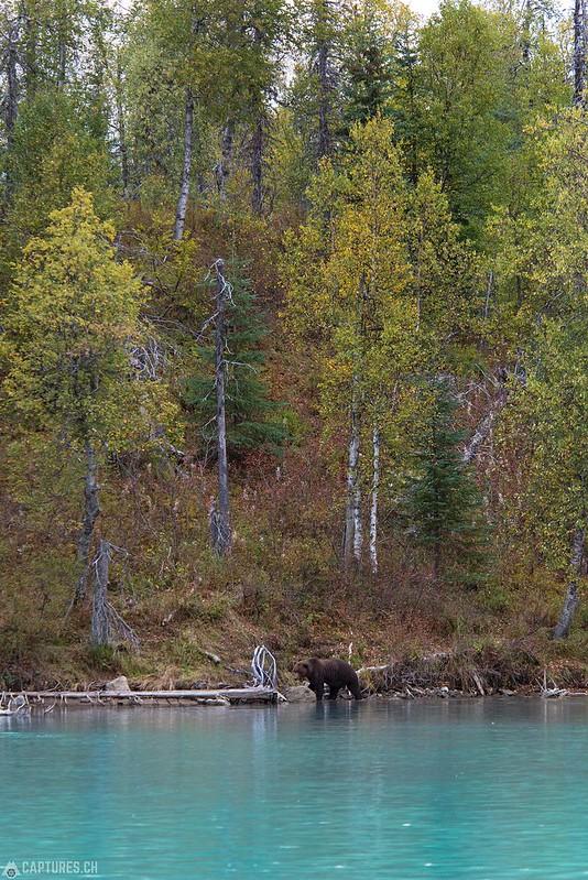 On the shore - Lake Clark National Park