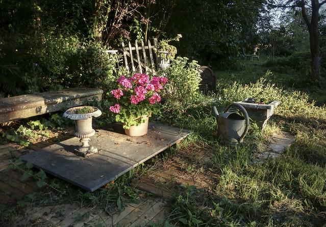Thierry's garden