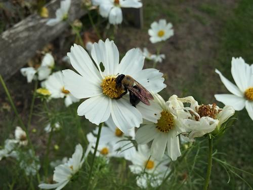 Garden Bloggers' Bloom Day, October 2016