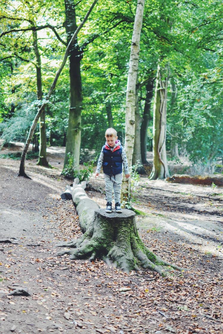 Autumn Walk tree stump