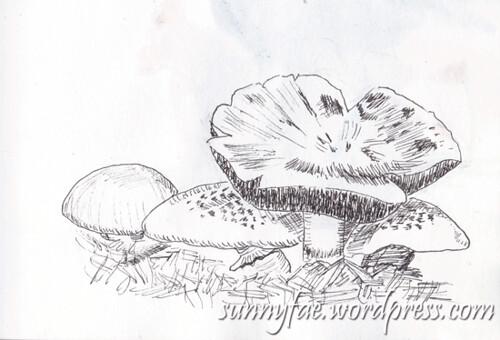 mushroom-line-sketch