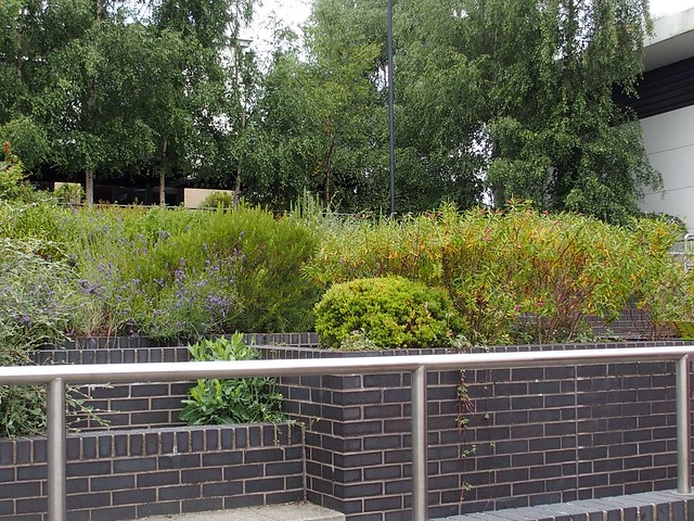 Didcot town centre planters