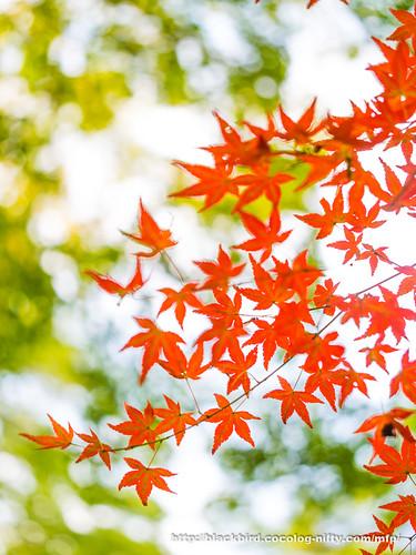 Autumn #02