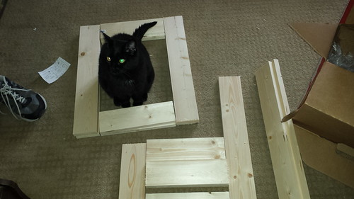 Gizmo helping with 1x4s