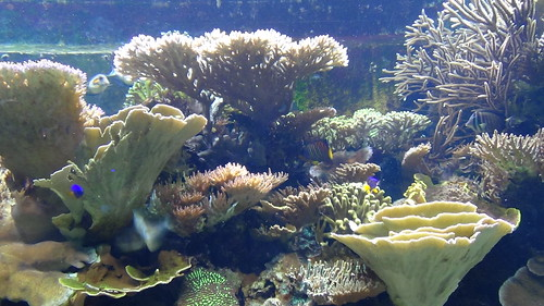 London Zoo Aquarium July 16 (6)