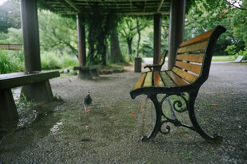 雨に濡れたベンチ