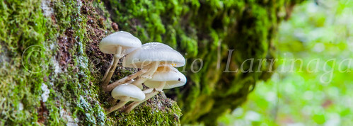 Parque Natural de #Gorbeia #DePaseoConLarri #Flickr      -1346