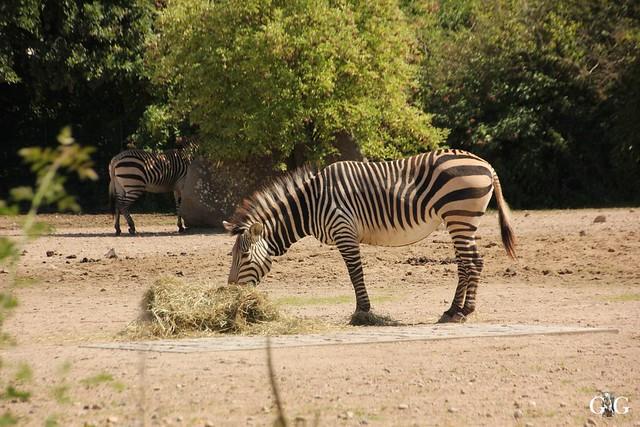 Besuch Tierpark Friedrichsfelde 07.08.16103