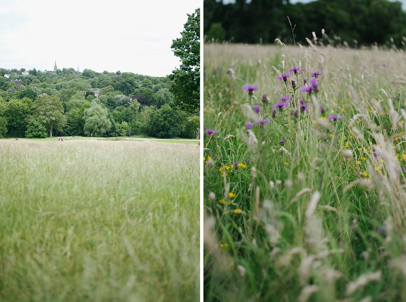 hampstead heath 4