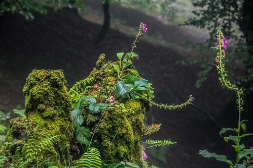 Parque Natural de #Gorbeia #DePaseoConLarri #Flickr - -859