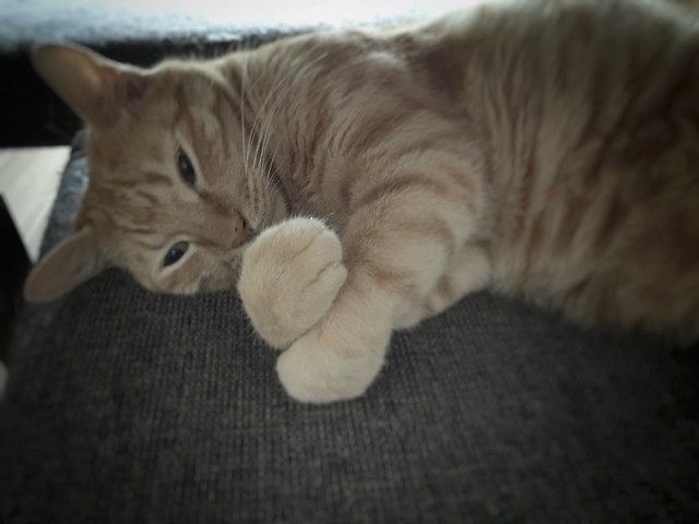 #cat #cats #catsofinstagram #catstagram #instacat #instagramcats #neko #nekostagram #猫 #ねこ #ネコ ネコ部 #猫部 #ぬこ #にゃんこ #ふわもこ部 #茶トラ